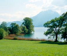 Bild des Breitenacherrieds